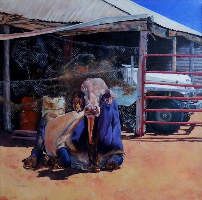 pilbara-bull